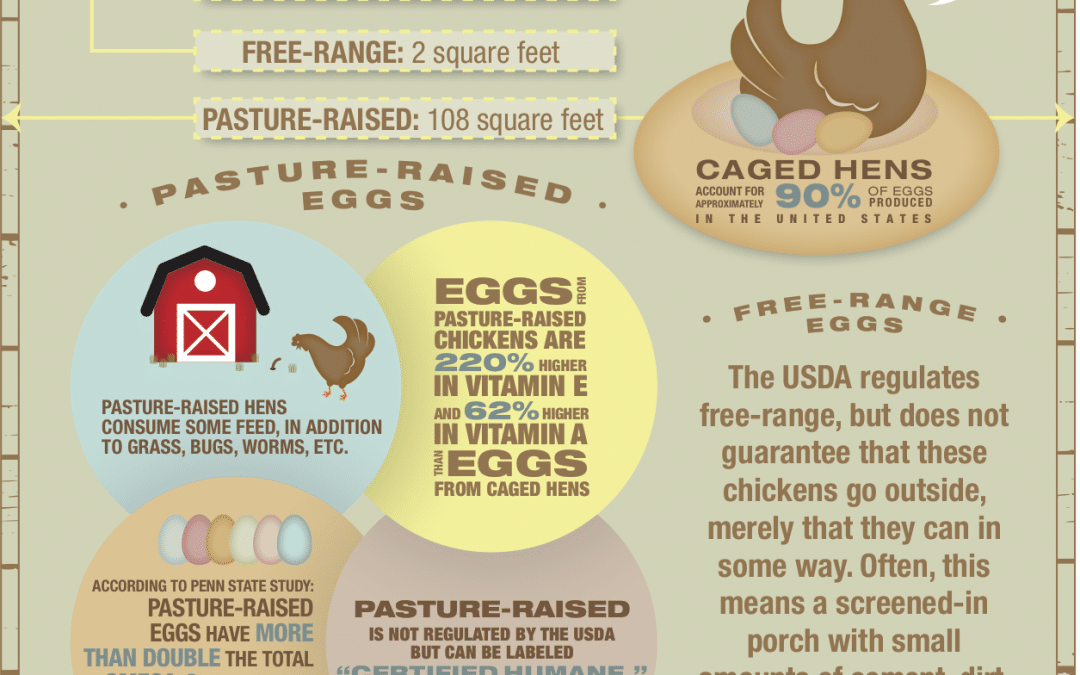 AN EGG-CELLENT IMPACT GROUP INFOGRAPHIC
